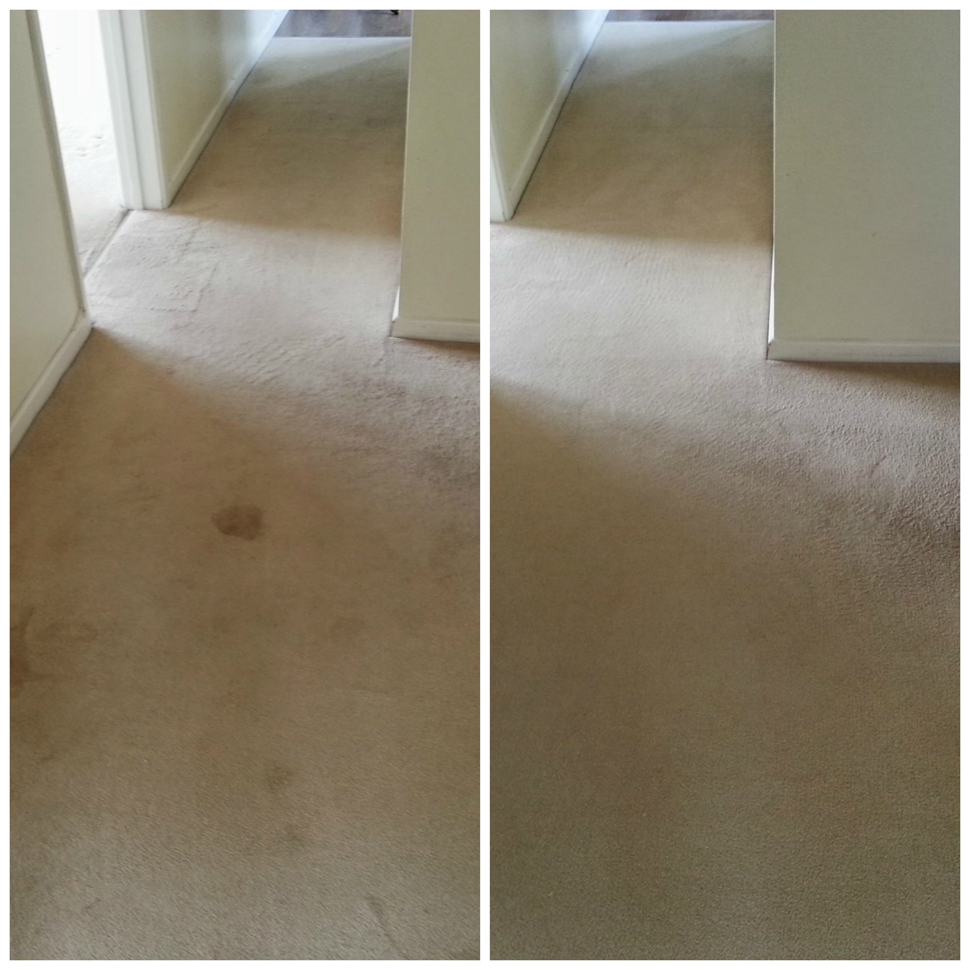 Professional Carpet Cleaning in Hertfordshire from www.fivestarfurnishingcare.co.uk
